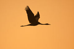Crane in sunset Stock Photography