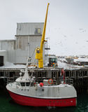Crane unloading fish from vessel, Norway Royalty Free Stock Photos