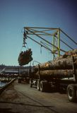 Crane unloading logging trucks Stock Photography