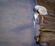 Crane in the water Stock Image