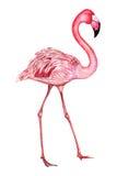 Crane in watercolor Stock Photos