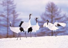 Crane in Winter Stock Photo