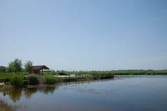 Crane Zhalong Nature Reserve Rojo-coronado Foto de archivo