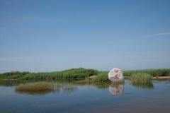 Crane Zhalong Nature Reserve Rojo-coronado Imágenes de archivo libres de regalías
