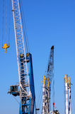 Cranes royalty free stock image