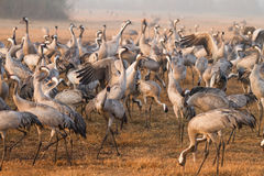 Cranes Stock Images