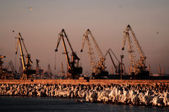 Cranes. On the sea shore Stock Images