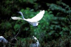 Cranes. Nature Details View Stock Images