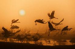 Free Cranes Royalty Free Stock Photos - 93221868