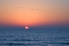 Cranes above the sea. Stock Photos