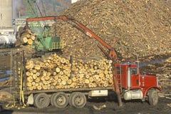 Cranes adding logs Royalty Free Stock Image