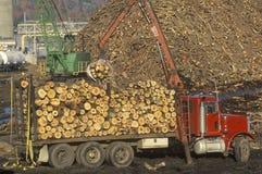 Cranes adding logs Stock Images