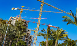 Cranes against a background of palm trees Royalty Free Stock Images