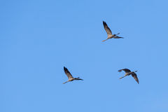 Cranes Stock Photography