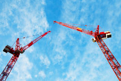 Cranes. Stock Photography
