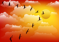 Cranes birds against sunset. Vector. Cranes birds against sunset. Colorful Vector background Stock Photo