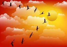 Cranes birds against sunset. Vector. Stock Photo