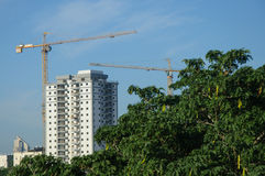 Cranes and building construction. Behind trees Royalty Free Stock Photography