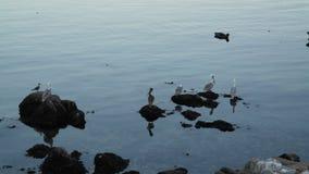 Cranes in California Stock Photo