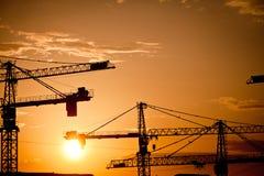 Cranes at dusk Stock Image