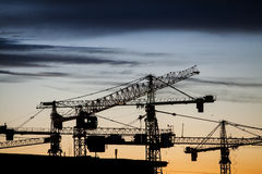 Cranes at dusk Stock Images