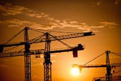 Cranes at dusk Stock Photography
