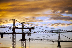 Cranes at dusk Stock Photos