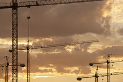 Cranes at dusk in warm tone Stock Image