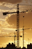 Cranes at dusk in warm tone Stock Images