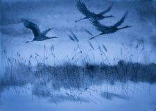Cranes in flight Stock Images