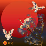 Cranes fly. Illustration crane flying red sun background Royalty Free Stock Photos