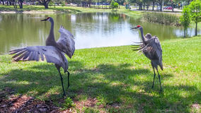 Cranes are flying Royalty Free Stock Images