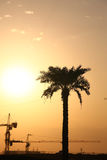 Cranes Guarded By Palm Tree On An Evening Sun royalty free stock images