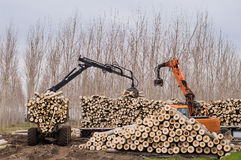 Cranes for logs and woodpiles. Cutting of poplars, crane log and woodpiles Stock Photography