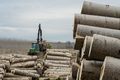 Cranes for logs and woodpiles. Cutting of poplars, crane log and woodpiles Royalty Free Stock Photos