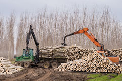 Cranes for logs and woodpiles. Cutting of poplars, crane log and woodpiles Royalty Free Stock Photography