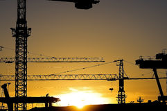 Cranes silhouettes at sunrise Royalty Free Stock Images