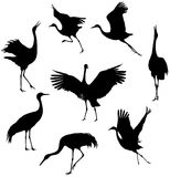 Cranes. Silhouettes of the cranes on white background royalty free illustration