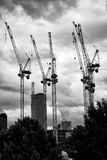 Cranes in the sky. Cranes everywhere. Black and white picture royalty free stock photo