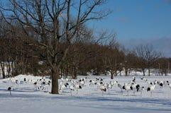 Cranes in a Snowy Field. Some Cranes in a Snowy Field in Hokkaido, Japan stock photo