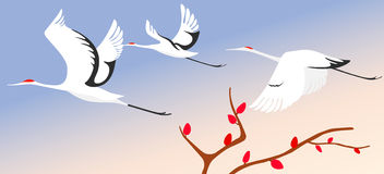Cranes in spring. 3 beautiful cranes flying in the spring sky royalty free illustration