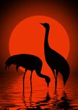 Cranes and sun Royalty Free Stock Photo