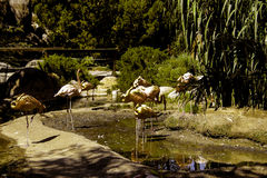 Cranes Sunning Themselves Royalty Free Stock Image