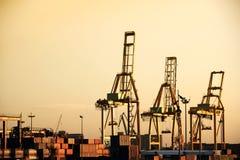 Cranes during sunset Stock Photos