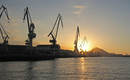 Cranes at Sunset. By the river royalty free stock image