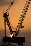 Cranes with the sunset,close-up. Stock Photos