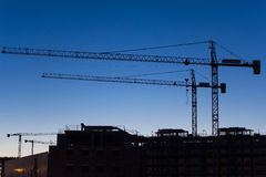 Cranes at sunset Stock Photography