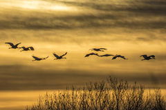 Cranes & Sunset royalty free stock photography