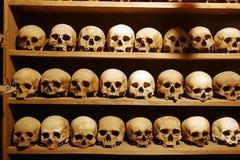 Crani Fotografie Stock