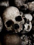 Crani Immagine Stock